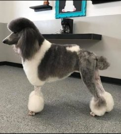 Bubbles N Bows Grooming Salon
